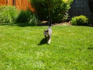 Bennett on the prowl. . ..